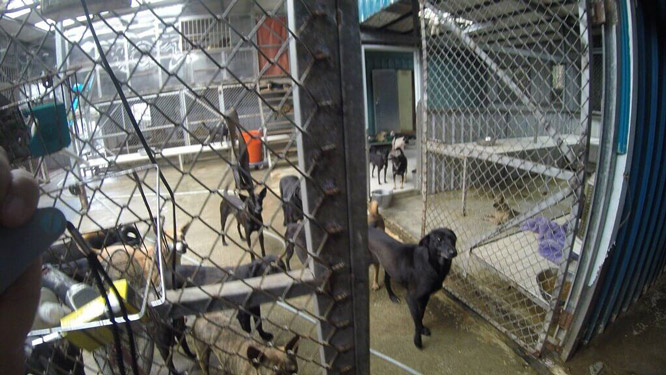 Mrs. Chang's Animal Shelter-7