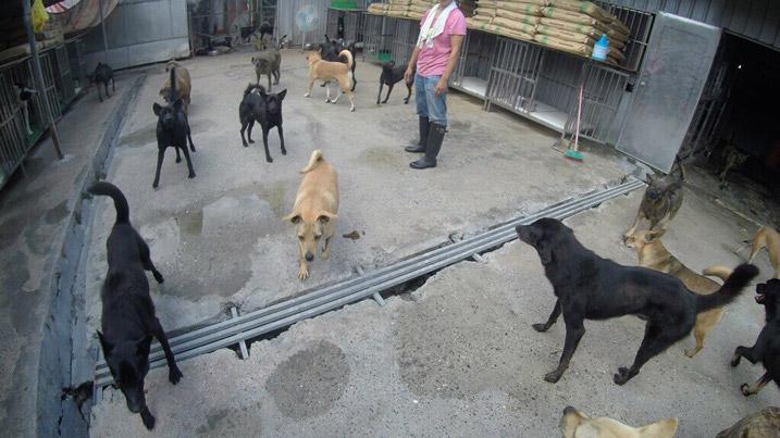 Mrs. Chang's Animal Shelter-8